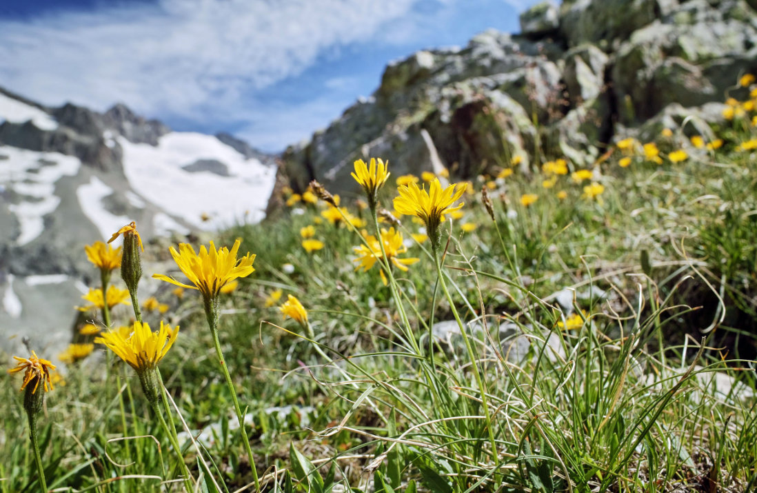 Alpienne Über uns